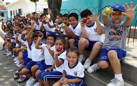 Lonchera y menú diario de escolares deben contener alimentos constructores, energéticos y protectores
